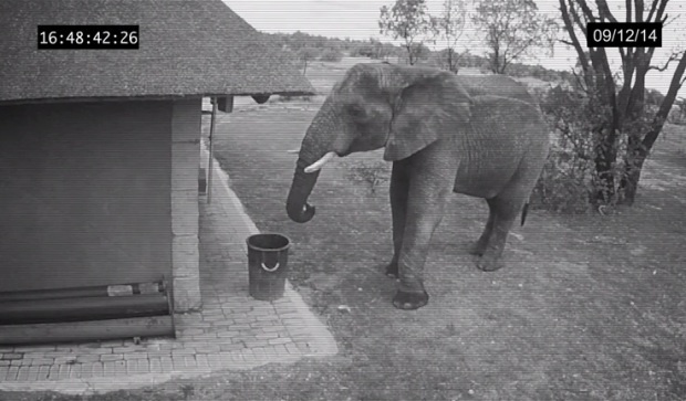 Слон оказался культурней большинства людей (1 фото + 1 видео)