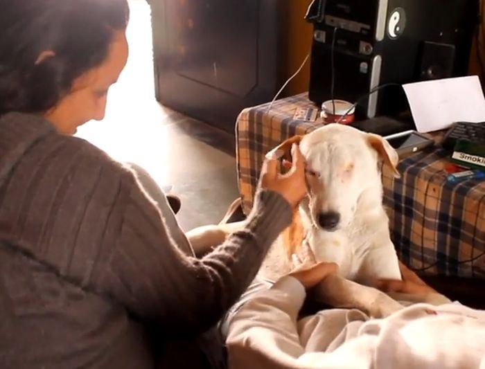 Индия: спасение бездомной собаки (9 фото)