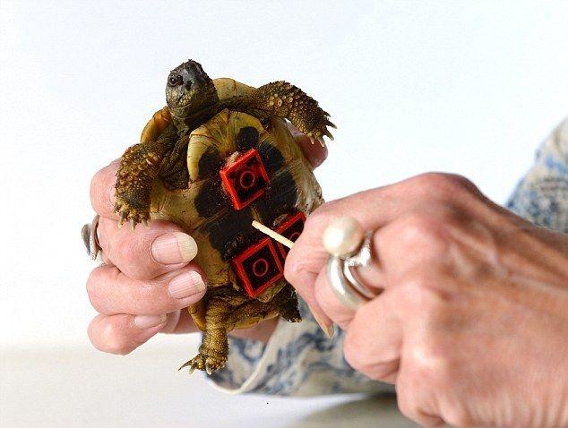 Собрал из лего живую черепашку (4 фото)