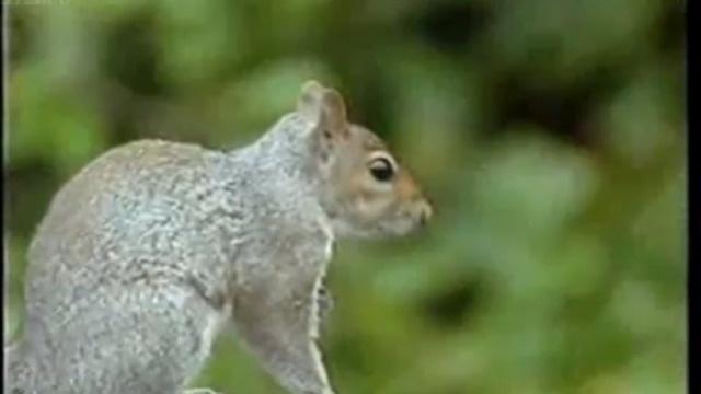 Белка: миссия невыполнима (1 фото + 1 видео)
