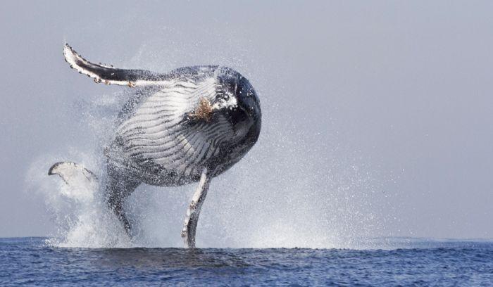 Топ лучших фотографий 2014 года от агентства Barcroft Media (30 фото)