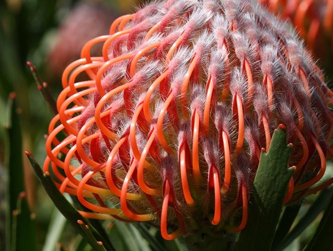 La increíble belleza de las plantas (21 fotos)