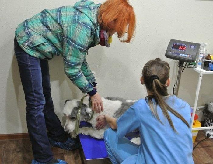 Новосибирск: за год собака, запертая в квартире, превратилась в лохматое чудовище (18 фото)