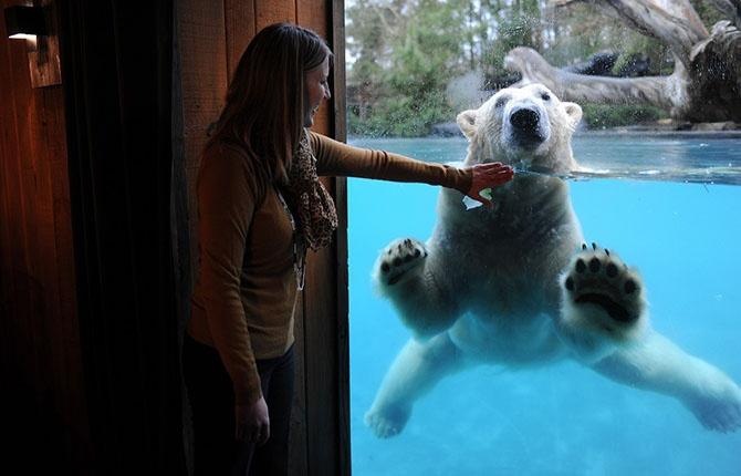 Лучшие фотографии животных за неделю (15 фото)