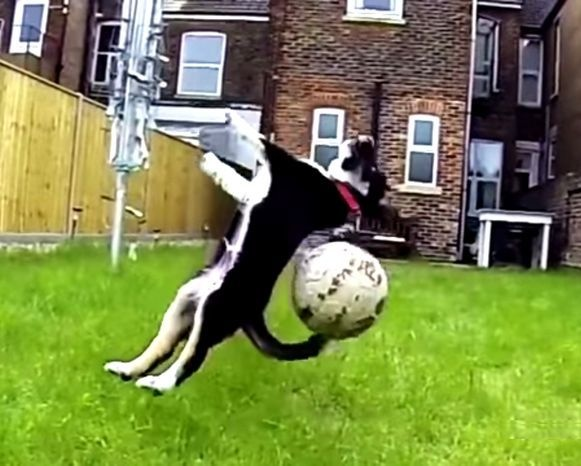 27 уморительных собак (1 фото + 1 видео)