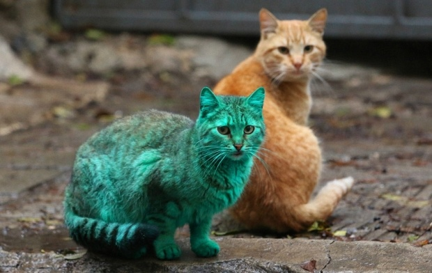 Зеленый кот из Варны (9 фото + 1 видео)