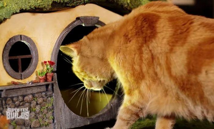 Кошачий дом поклонника фильма «Властелин колец» (16 фото)