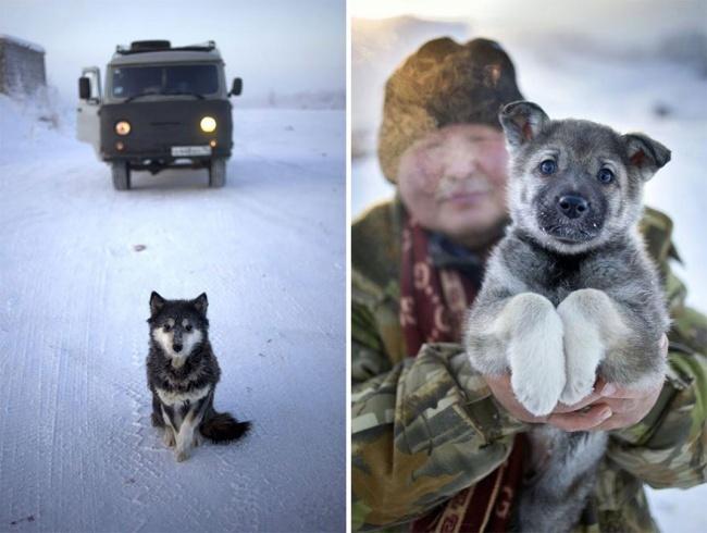 Где сейчас настоящая зима (21 фото)