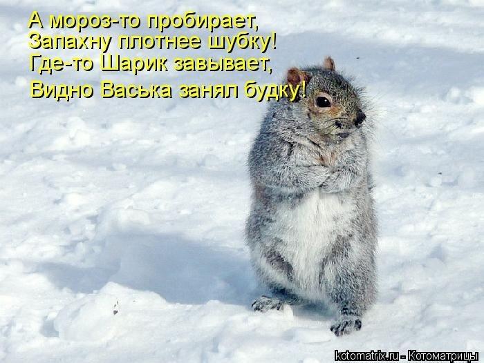 Лучшие котоматрицы недели 26.12.2014 (50 фото)