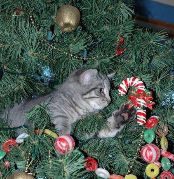 Кошки тоже ждут Новый год! (22 фото)