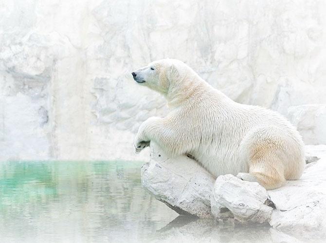 Подборка лучших снимков National Geographic за год (31 фото)