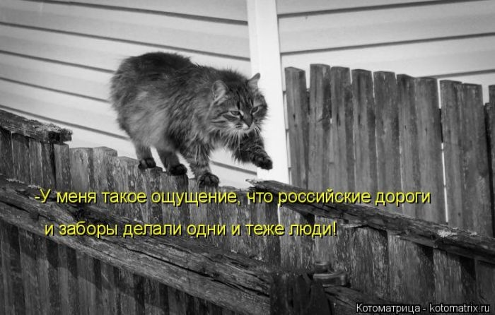 Лучшие котоматрицы недели 31.12.2014 (50 фото)