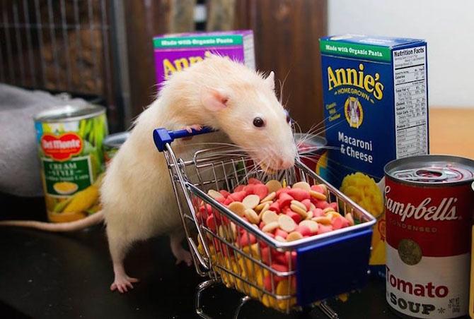 Очаровательный Мышонок Марти (11 фото)