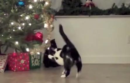 Коты против новогодних елок (1 фото + 1 видео)