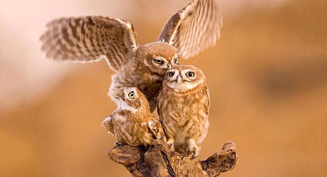 Животные в фотографиях (36 фото)