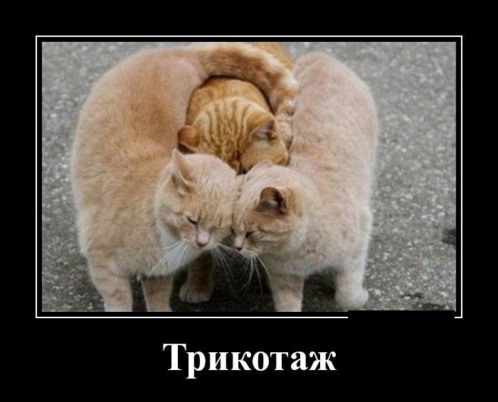 Демотиваторы 05.01.2015 (30 фото)