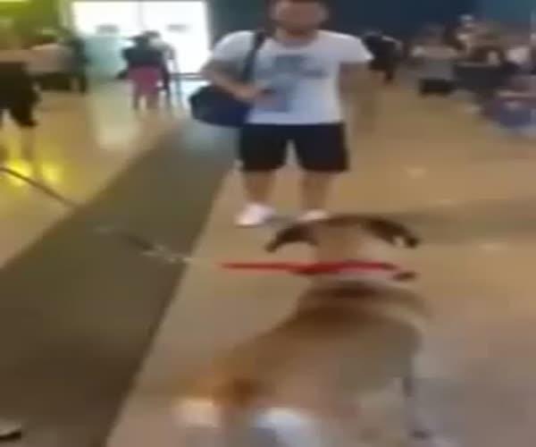 Собака встречает своего хозяина (1 фото + 1 видео)