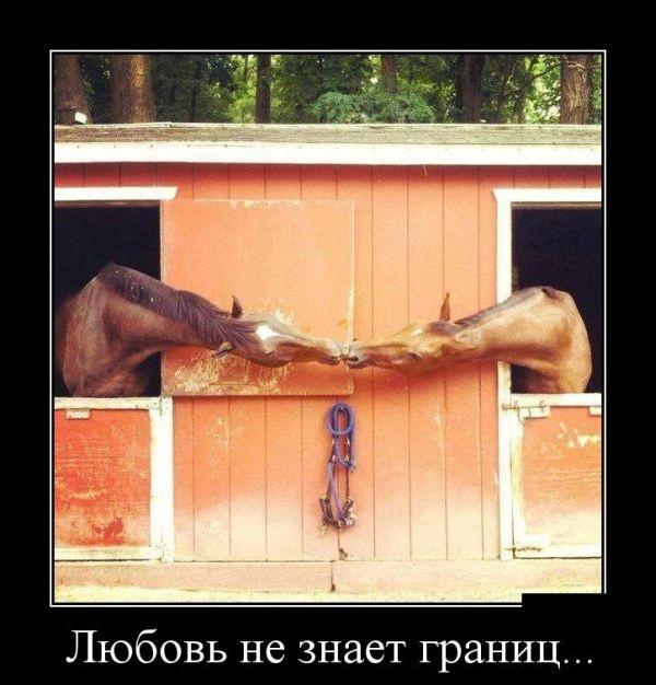 Демотиваторы 06.01.2015 (30 фото)