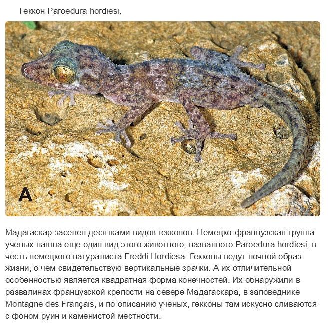 Учеными в прошлом году открыты новые виды животных (15 фото)