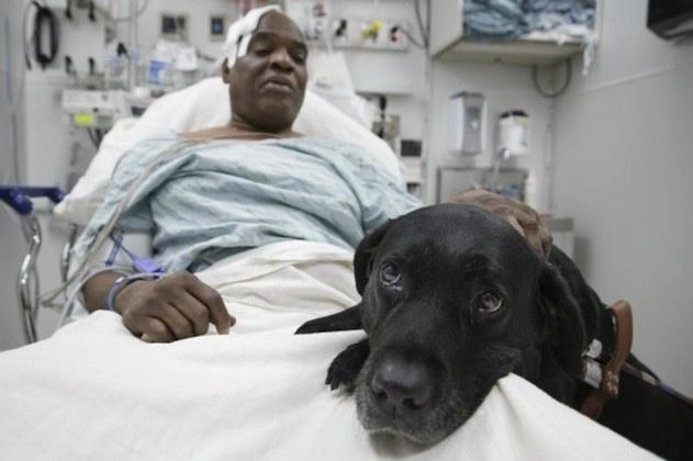 Трогательные истории животных, спасших жизнь людям (8 фото)