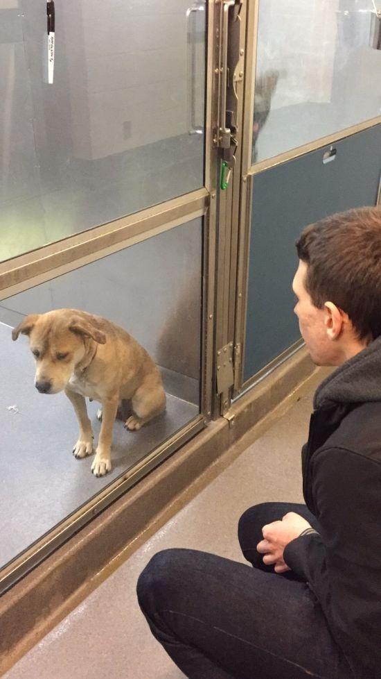 Пес из приюта получил новых хозяев (2 фото)