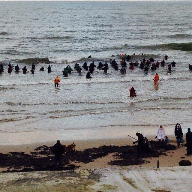 Калининградская область: Балтийское море усыпало янтарем пляж (4 фото + 1 видео)