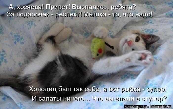 Лучшие котоматрицы недели 09.01.2015 (50 фото)