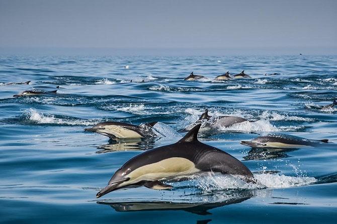 Животные в фотографиях (75 фото)