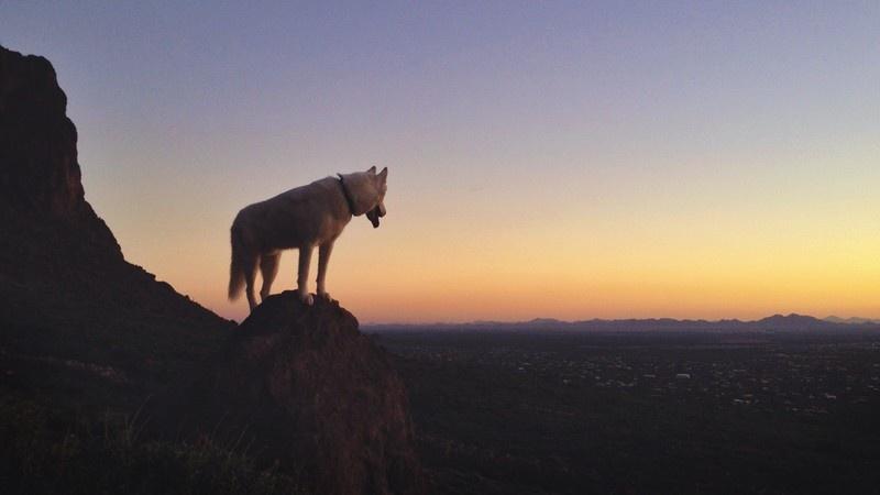 Джон и его Волк (31 фото)