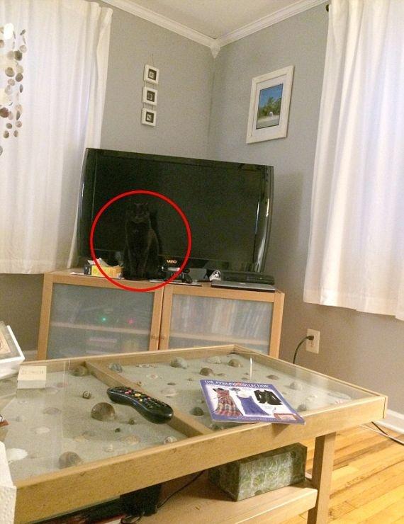 Кот - мастер маскировки (3 фото)