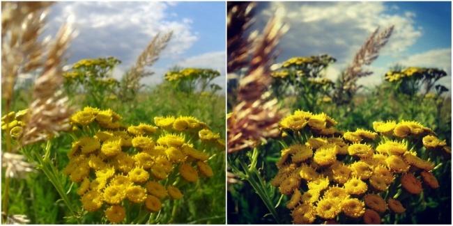 Как сделать отличную фотографию на смартфон (11 фото)