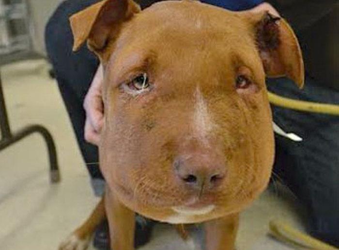 Америка: спасение щенка с веревкой на шее (7 фото)