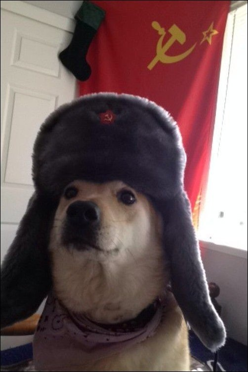 Из России с любовью 13.01.2015 (18 фото)