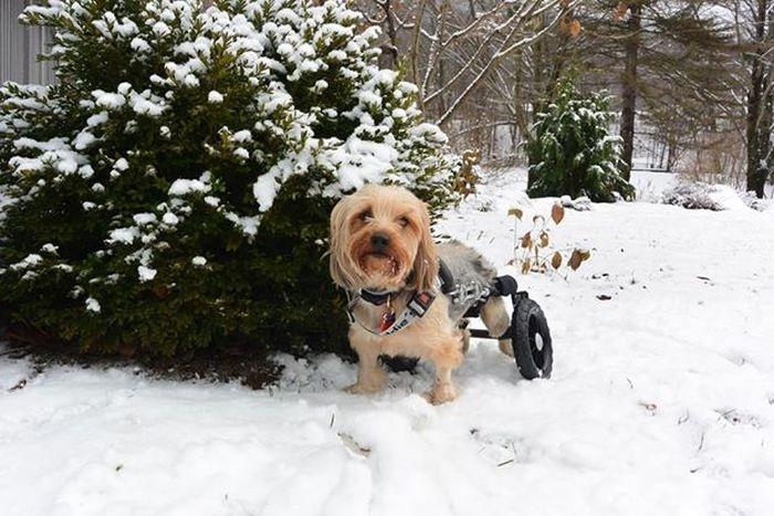 Инвалидные коляски для наших четвероногих друзей (20 фото)