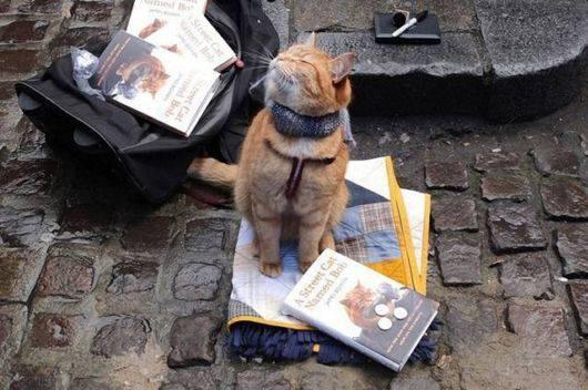 Уличный кот, который воспитал себе хозяина и прославился на весь мир (10 фото)