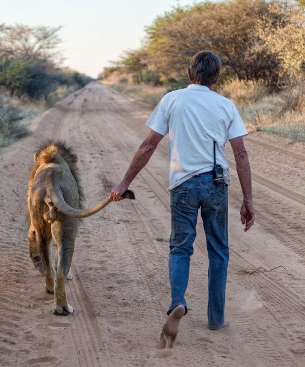 Южная Африка: мужчина вырастил настоящего льва (10 фото + 2 гифки)