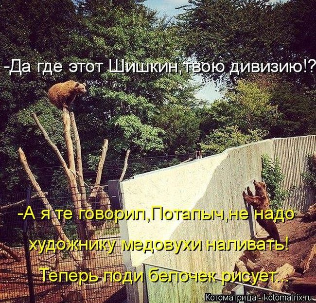 Лучшие котоматрицы недели 16.01.2015 (49 фото)