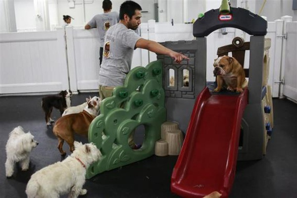 Самые роскошные отели для домашних животных (13 фото)