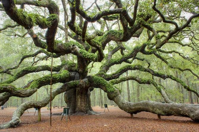 Самые впечатляющие деревья в мире (10 фото)