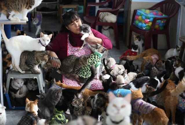 Перуанская медсестра заботится о 175 больных кошках