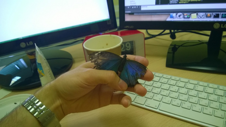 Домашняя бабочка, или каково это, когда у тебя дома живет бабочка