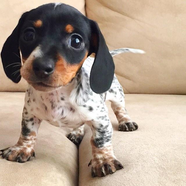 Чудо-щенок (15 фото)
