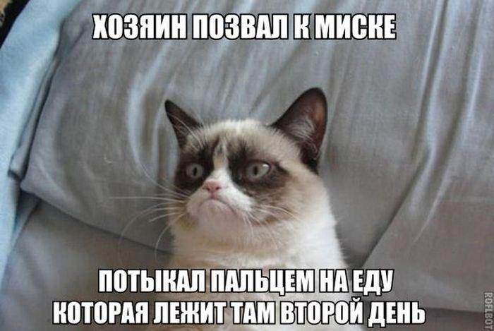 Забавные картинки и демотиваторы 20.01.2015 (102 фото)