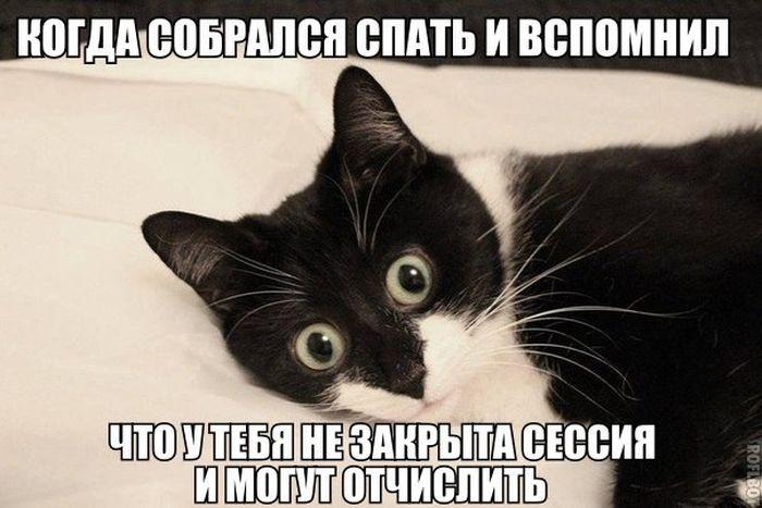 Веселые картинки 21.01.2015 (94 картинки)