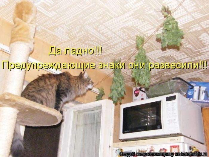 50 смешных котоматриц (50 картинок)