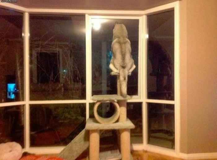 Прикольные фото собак (22 фото)