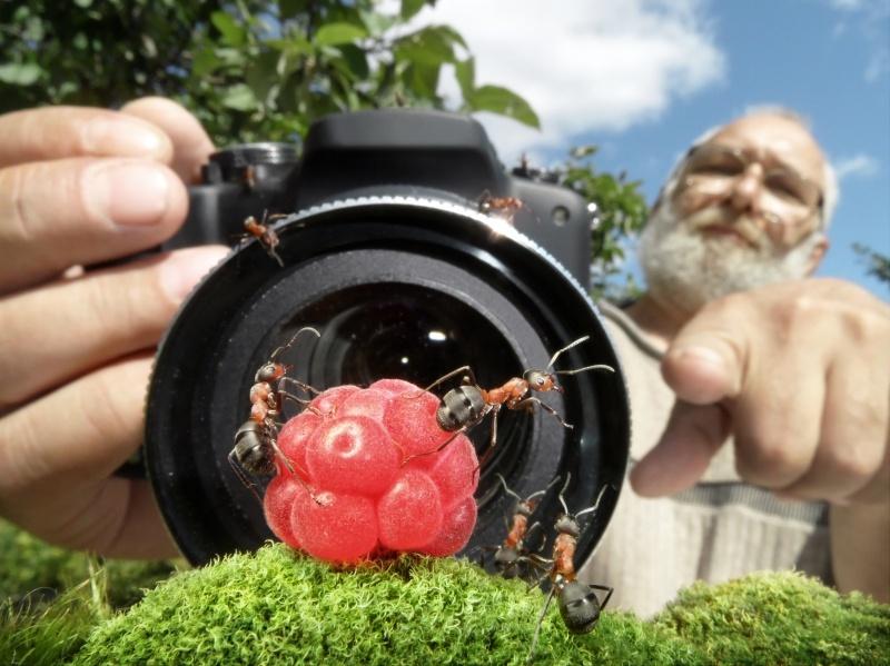 Муравьиный режиссер (32 фото)