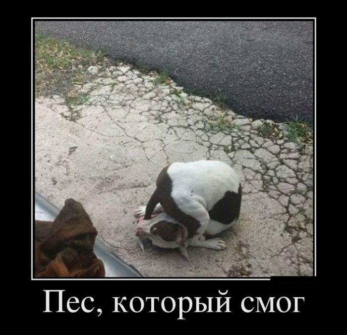 Подборка демотиваторов 28.01.2015 (30 картинок)
