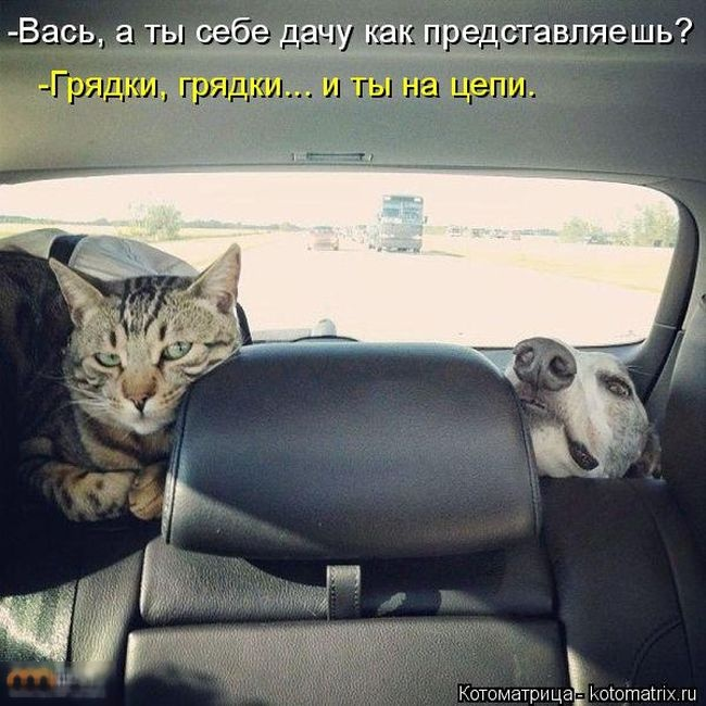 Забавные котоматрицы (50 фото)