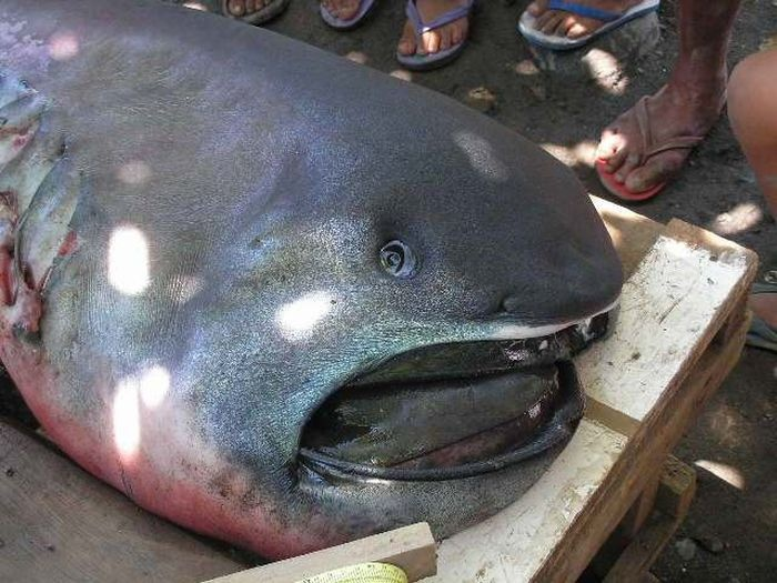 Филиппинские рыбаки поймали морского монстра